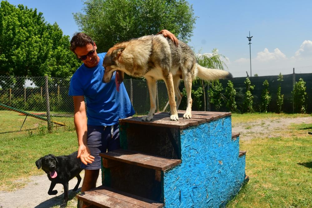 asilo_van_dog_roma