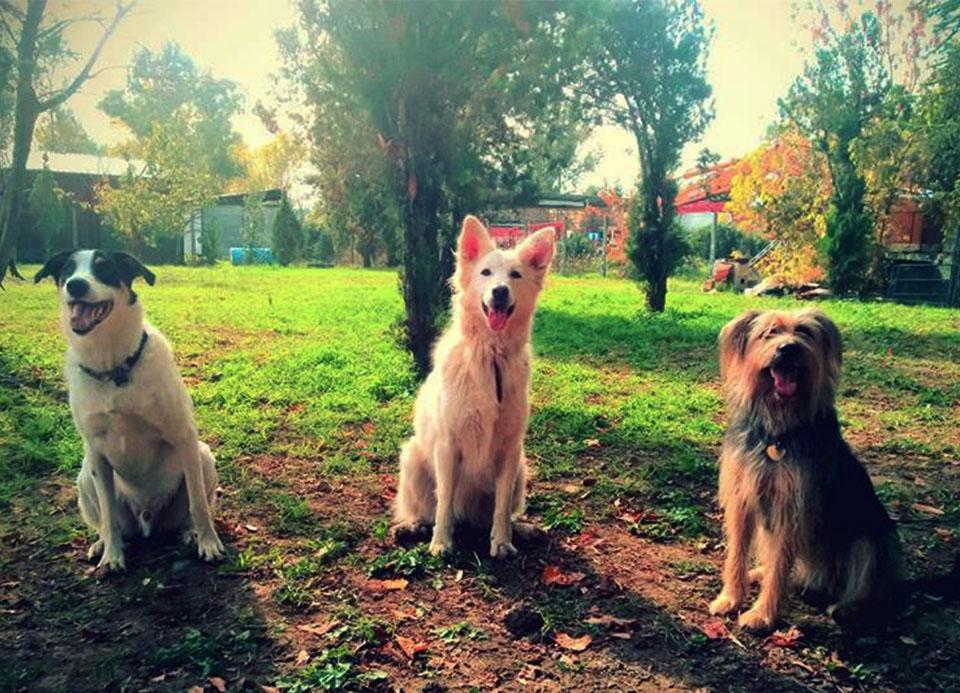 addestramento cani roma