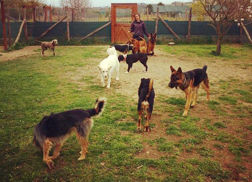 socializzazione cani van dog